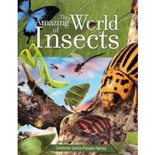 The Amazing World of Insects